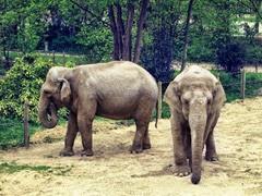 Amiens zoo éléphants