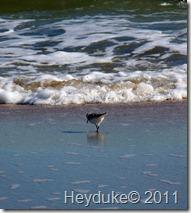 2011-10-21 Huntington Beach SP 057