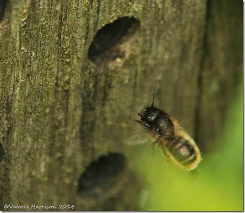 6 bee