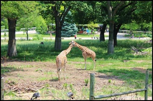 Zoo4 295