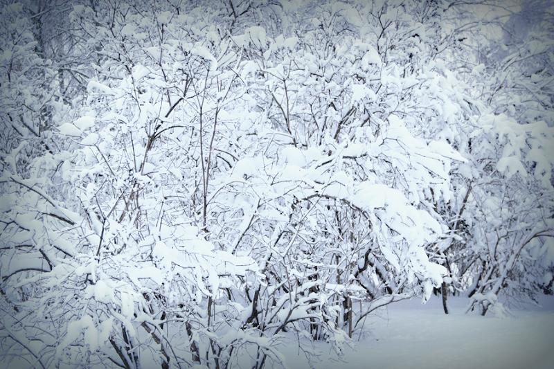 Vinter Norrbotten