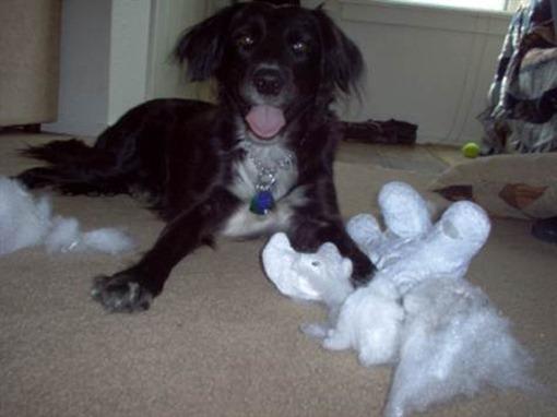 Собака сгрызла игрушку