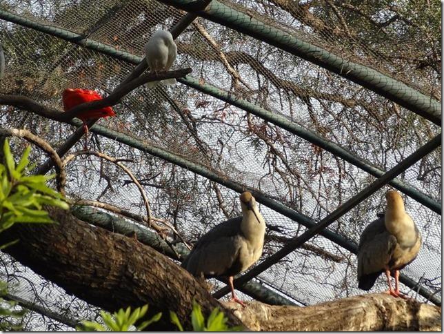 Santiago_Zoo_DSC03859