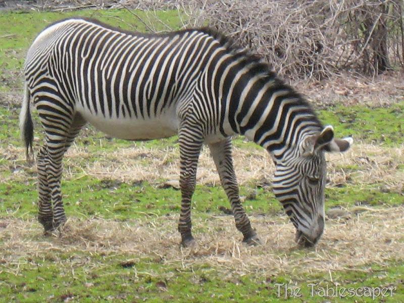 Bronx Zoo6