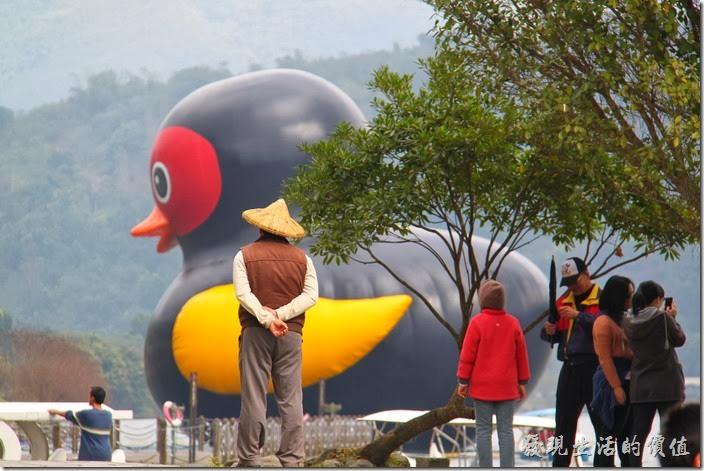 花蓮-鯉魚潭紅面番鴨。預計「紅面番鴨」將為花蓮縣帶來一定的觀光收入。