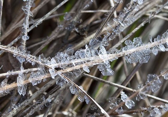 frost-crystals_MG_3488-copy.jpg