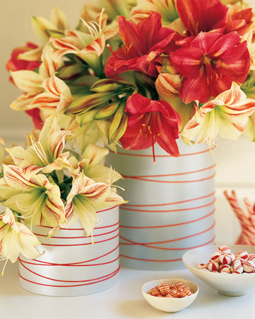 Red-and-white amaryllis recall classic candy-cane stripes and thus inspired this container. Cylindrical glass vases are wrapped in pearlescent paper or vellum and finished with red ribbon.