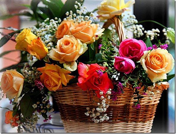 flores-facebook-tumblr-rosas-las flores-fotos de flores-715