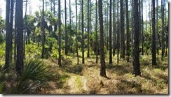 Pine hammock
