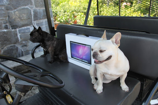 And, seeing that we are tech savvy Frenchies, it's only fitting that we help him set it up.