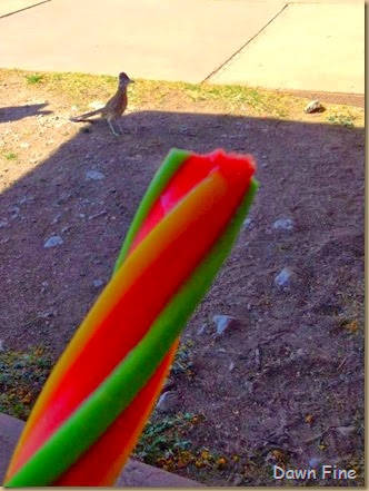 popcicle and roadrunner