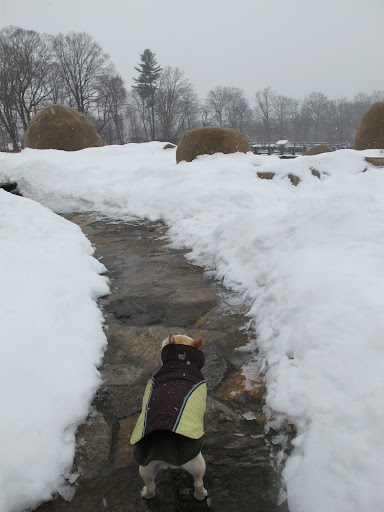 Lucky that the snow hasn't stuck to this path yet.  However, at the rate this snow is falling, that will change soon.