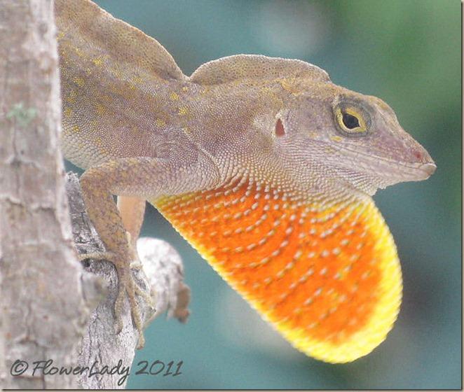 07-17-lizard2