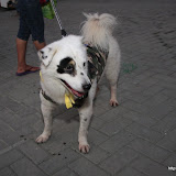 Pet Express Doggie Run 2012 Philippines. Jpg (12).JPG