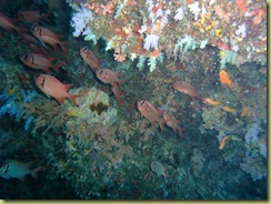 Fishes in Cave