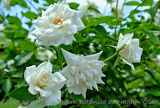 0131 - Glória Ishizaka - Jardim Botânico Nagai - Osaka