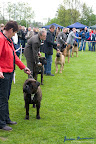 20100513-Bullmastiff-Clubmatch_31162.jpg