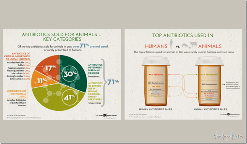 antibiotic infographic