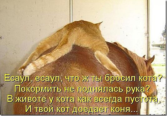 kotomatrix_39