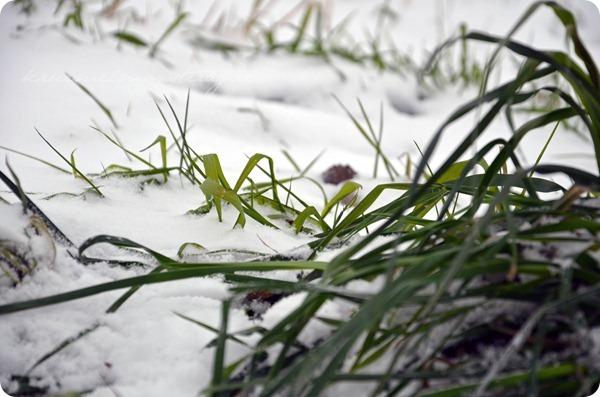 Schneesonntag 20zwölf (16)