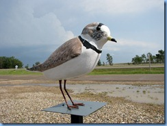 8542 Saskatchewan Trans-Canada Highway 1 Chaplin - Chaplin Nature Centre - Piping Plover statue