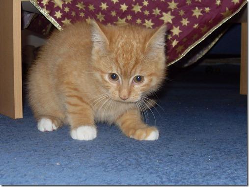 2011_12 Garfield (10)