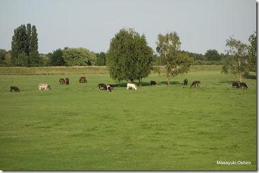 Lier市郊外の田園風景