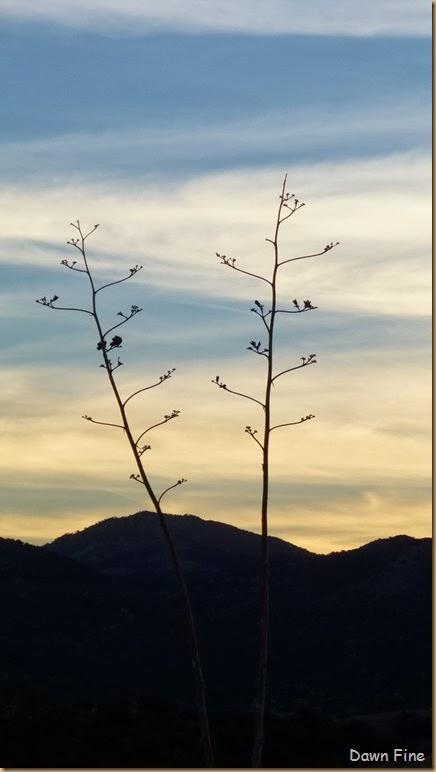 San Rafael Grasslands_035