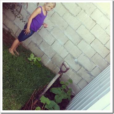 pumpkincrop2012