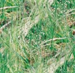 meadow-grass-tile