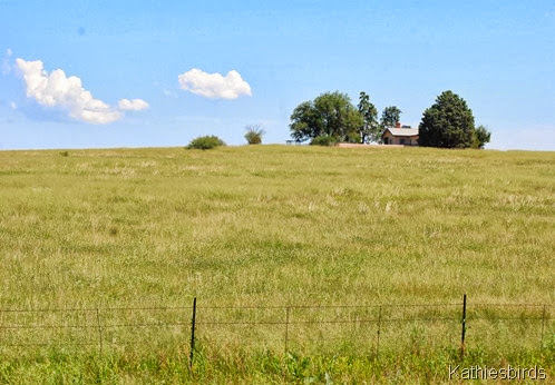 5. grassland-kab