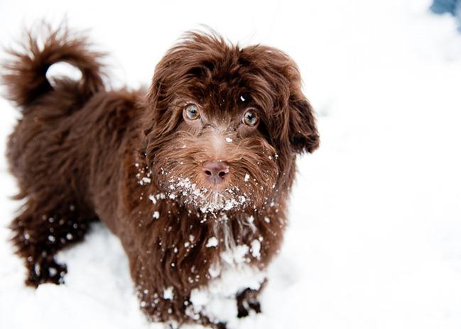 Snow on Sunday-4891