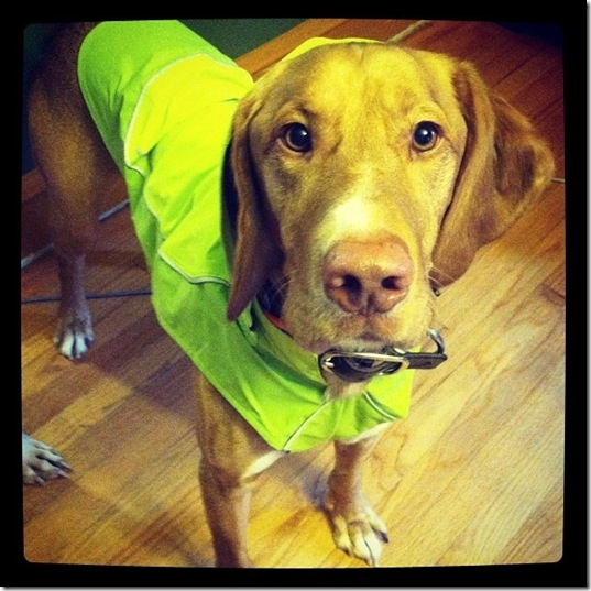 hurricane-sandy-dogs-3