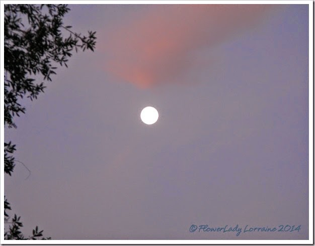 07-013-moon-setting-at-sunrise2