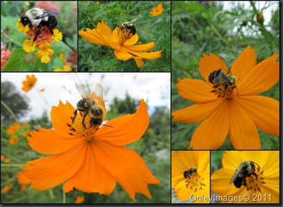 bees collage