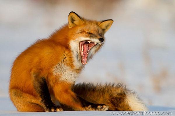 animais-bocejando-bocejar-desbaratinando (11)