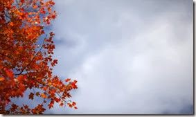 image of autumn tree