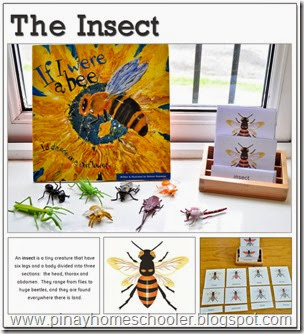 The Insect Learning Pack