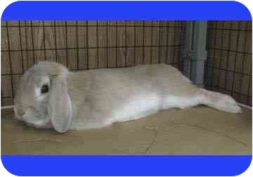 Brendon Bunny is a house-trained, neutered adorable male in need of a home.