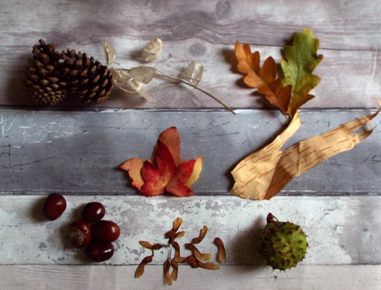 little pieces of autumn