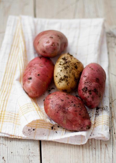 Eggplant-potato