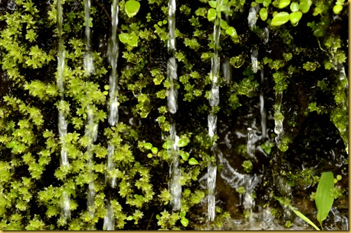 valparai-rain on ferns
