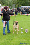 20100513-Bullmastiff-Clubmatch_31138.jpg