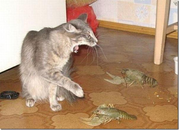 Socorro, lagostas