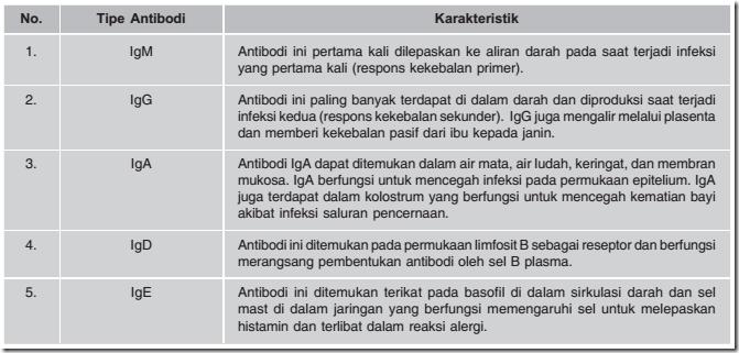 Tipe Antibodi