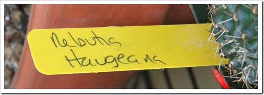 120530_Rebuta-haugeana_11