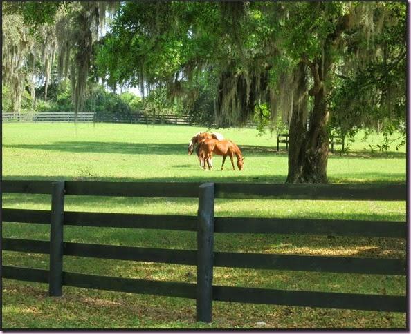 horsesIMG_3108