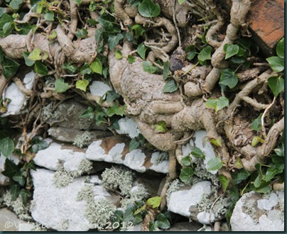 9-ivy-wall