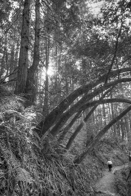 Muir Woods Black and White-10