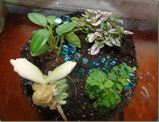 Terrarium - Take 2 - 3